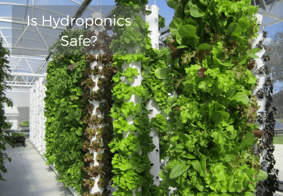 Is Hydroponics Safe?