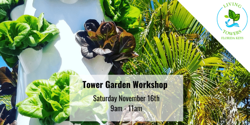 Tower Garden Workshop